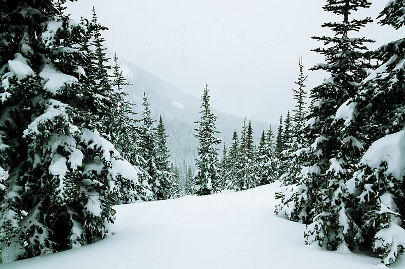 Snowy Landscape by Terry Schmidbauer for Stocksy United