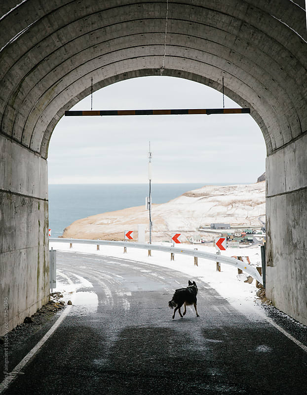Dog in tunnel by Kevin Faingnaert for Stocksy United