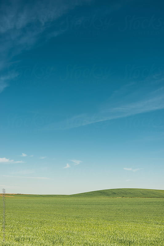 landscape with minimal fields by Javier Pardina for Stocksy United