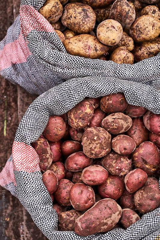Close-up of potatoes in textile bag in Peru by Trent Lanz for Stocksy United
