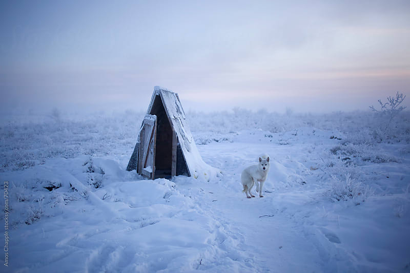 Dog near outdoor toilet in one of the coldest places on earth.  by Amos Chapple for Stocksy United