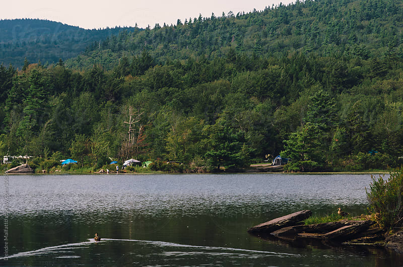 ducks swimming on a lake with tents in the distance by Deirdre Malfatto for Stocksy United