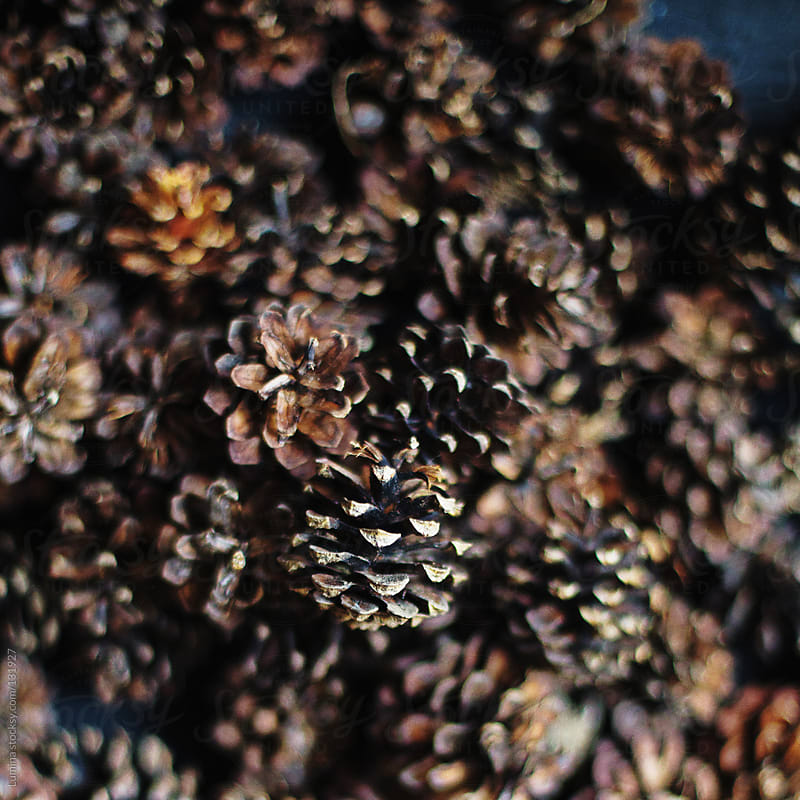 Pinecones by Lumina for Stocksy United