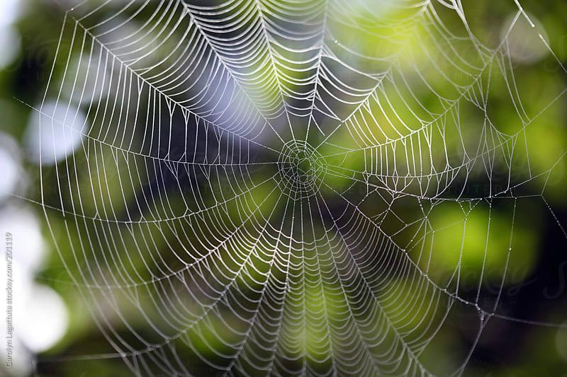 Beautiful spider web with a green background by Carolyn Lagattuta for Stocksy United