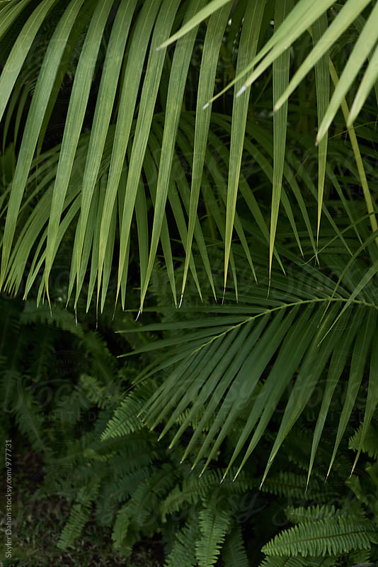 Areca Palm by Skyler Dahan for Stocksy United