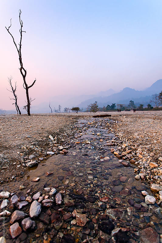Barren tree and a flowing stream at dusk by Saptak Ganguly for Stocksy United