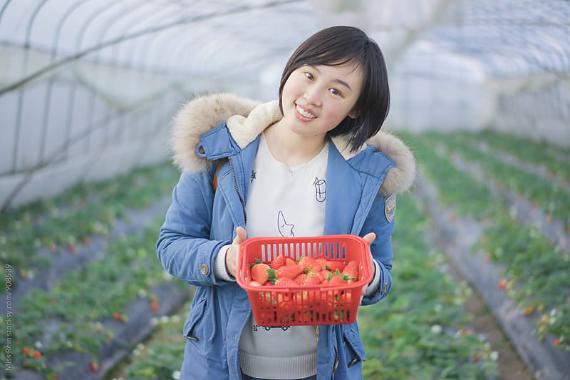 Picking fresh natural organic strawberries by Miss Rein for Stocksy United