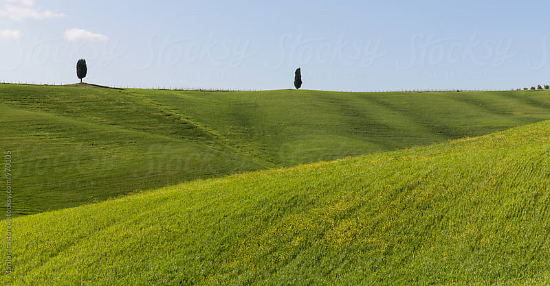 Lonely cypress trees on the hill by Marilar Irastorza for Stocksy United