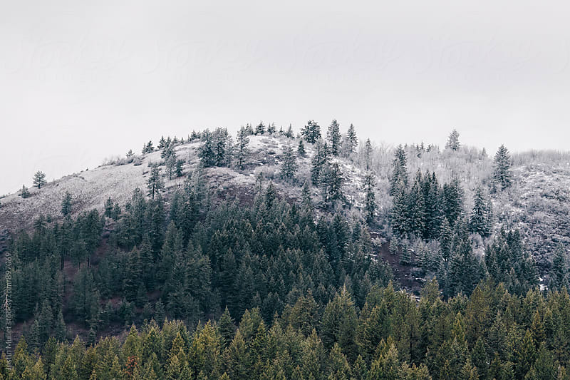 Fresh snow on top of a tree covered mountain top by Justin Mullet for Stocksy United