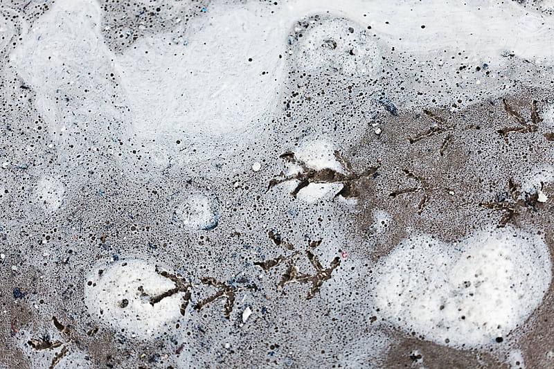 Bird Footprints on Sand and Surf by Eldad Carin for Stocksy United