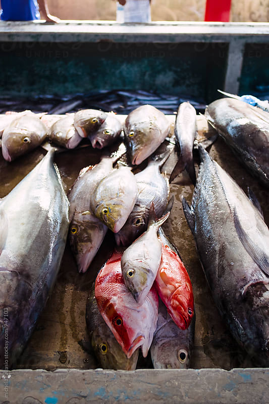 Fresh fish at market by michela ravasio for Stocksy United