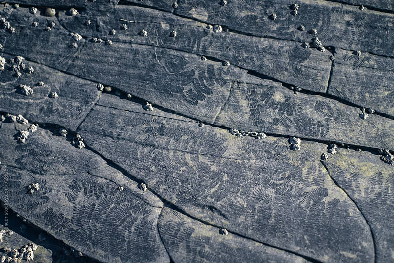 The patterns on a grey rock in close up by Rebecca Spencer for Stocksy United