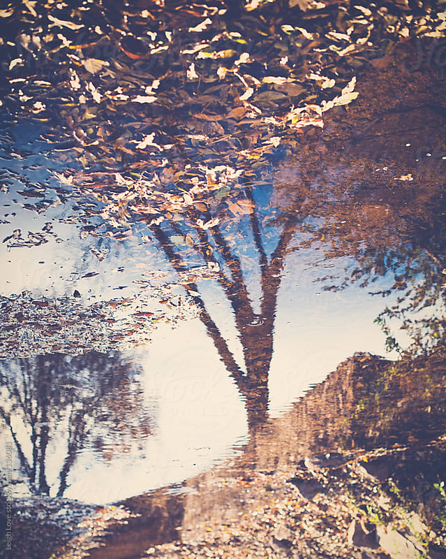 Trees Reflected in A Creek Full of Leaves by Leigh Love for Stocksy United