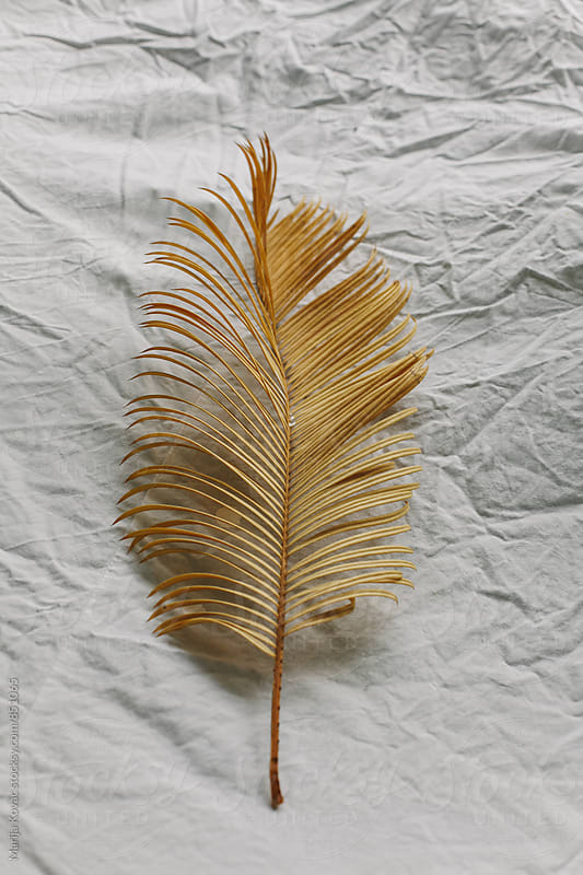 Yellow palm leaf on a white background  by Marija Kovac for Stocksy United