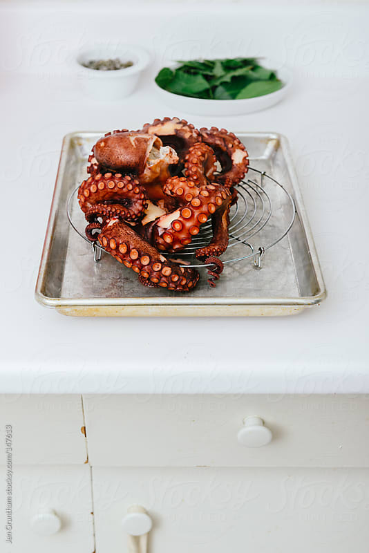Cooked octopus on drying rack by Jen Grantham for Stocksy United