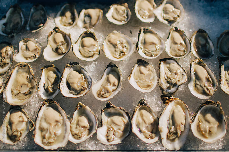 oysters on ice by Dylan M Howell Photography for Stocksy United