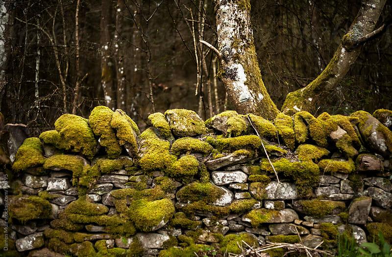 Dry stone wall.Scotland. by Darren Muir for Stocksy United