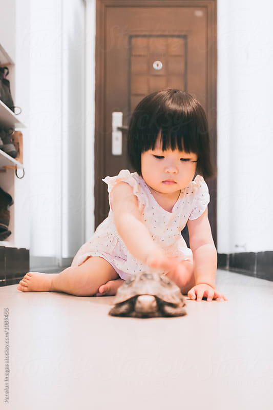 Asian baby girl with tortoise pets by Xunbin Pan for Stocksy United