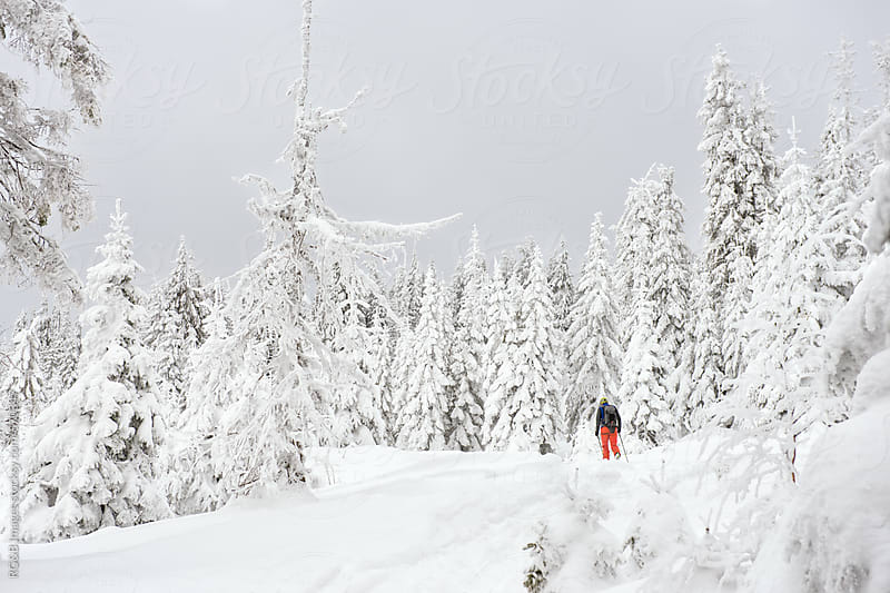 Landscape of frozen forest and little skier going uphill by RG&B Images for Stocksy United