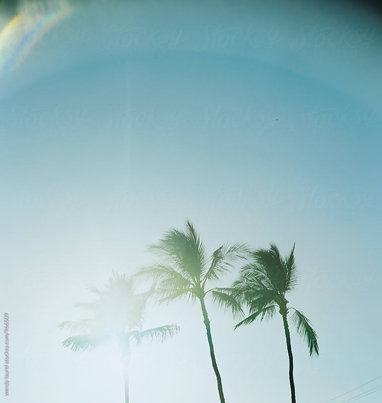 sun flare palm trees against sky by wendy laurel for Stocksy United