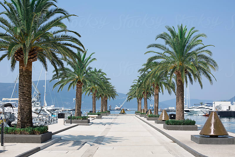 Alley with palm trees at seaside by Maja Topcagic for Stocksy United