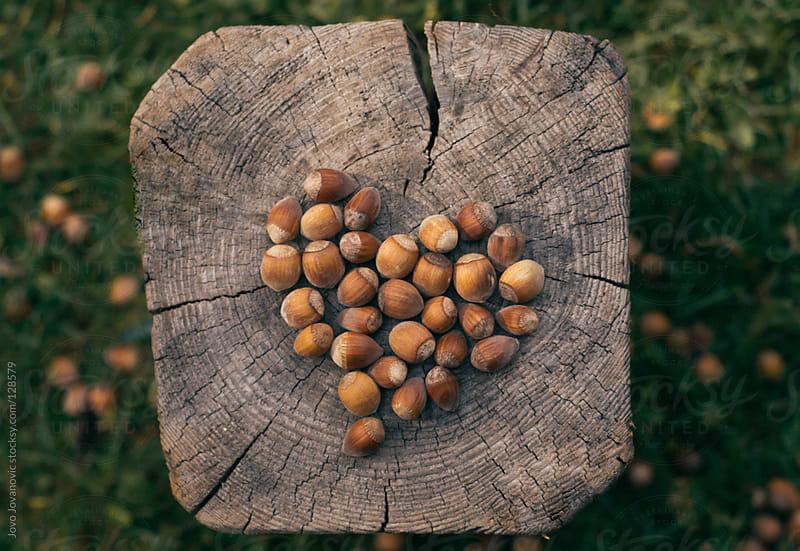 Hearth shaped hazelnuts.  by Jovo Jovanovic for Stocksy United