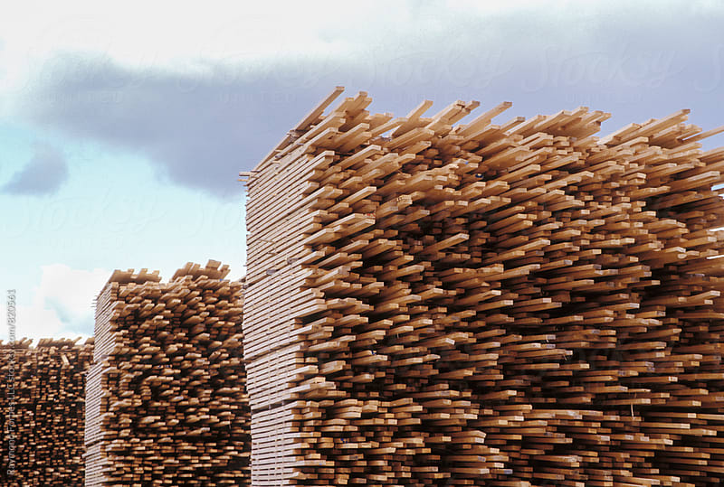 Timber Pile by Raymond Forbes LLC for Stocksy United