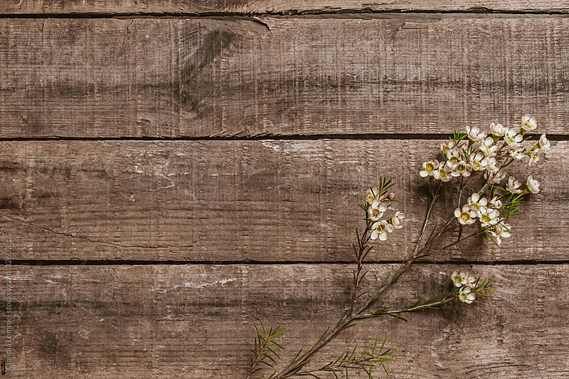 A Small Bunch of White  Flowers on a Wooden Texture by Claudia Lommel for Stocksy United
