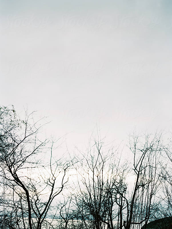 sky and trees by Kirill Bordon photography for Stocksy United
