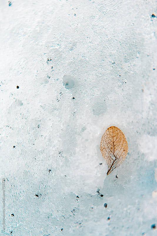 leaf skeleton in the snow by Tara Romasanta for Stocksy United