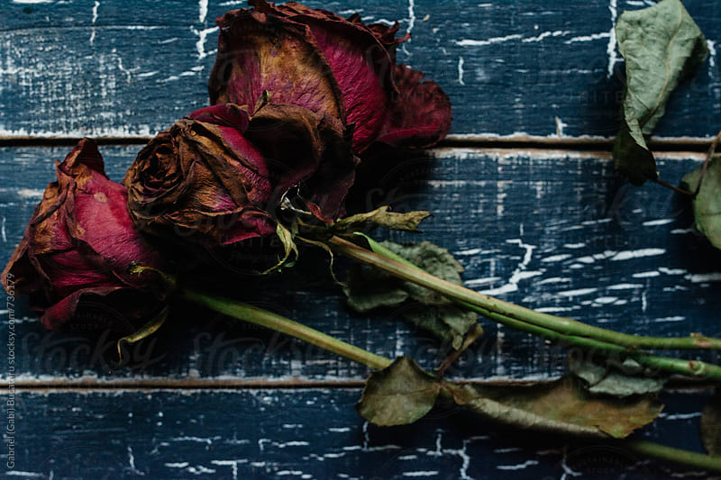Three wilded crimson roses on a blue wooden table by Gabriel (Gabi) Bucataru for Stocksy United
