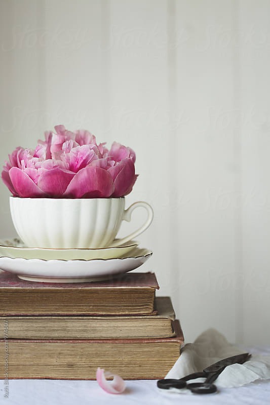 Peony rose in a vintage teacup by Ruth Black for Stocksy United