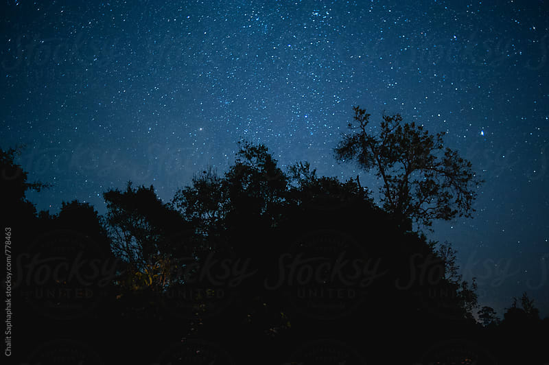 Night at Khaoyai National Park by Chalit Saphaphak for Stocksy United