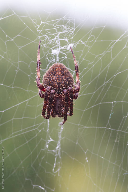 Spider on Web by Nathan French for Stocksy United