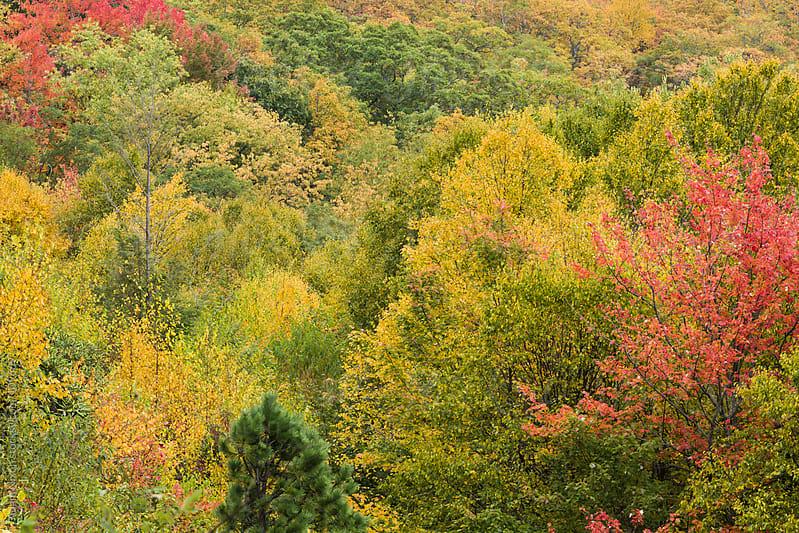 Fall Foliage by Adam Nixon for Stocksy United