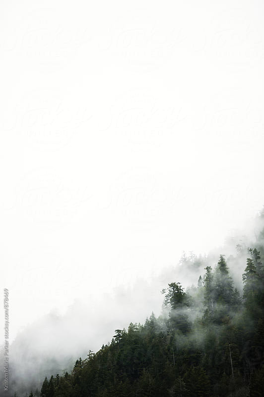 Trees on mountain in fog by Kristen Marie Parker for Stocksy United