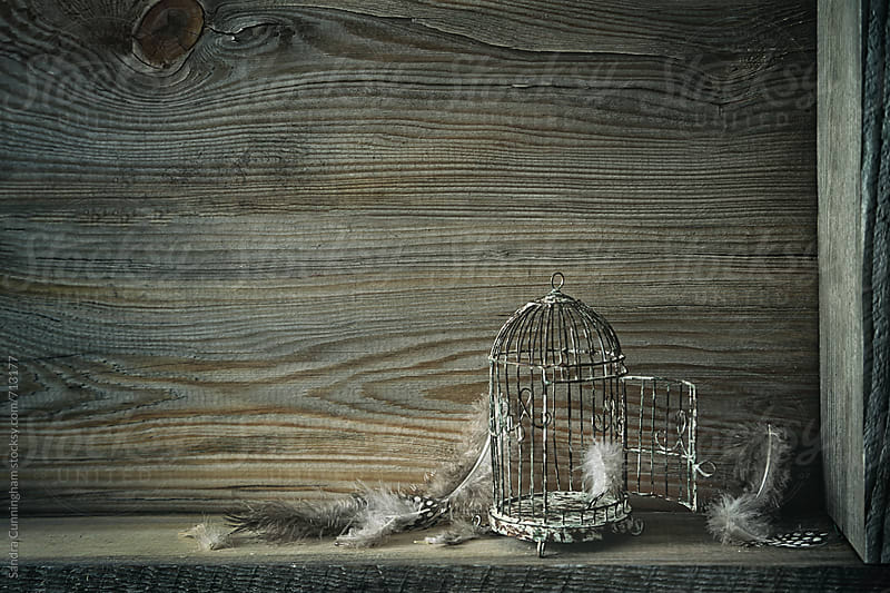 Little rusted birdcage on shelf by Sandra Cunningham for Stocksy United