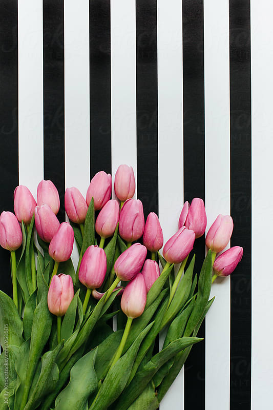 vertical image of a bouquet of pink tulips on a striped background  by Kelly Knox for Stocksy United