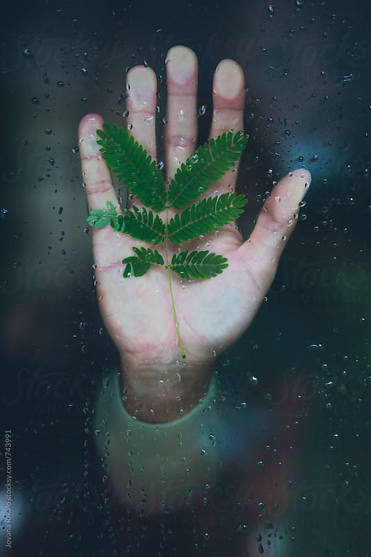 Man holding leaf in his hand stuck to the window by Jovana Rikalo for Stocksy United