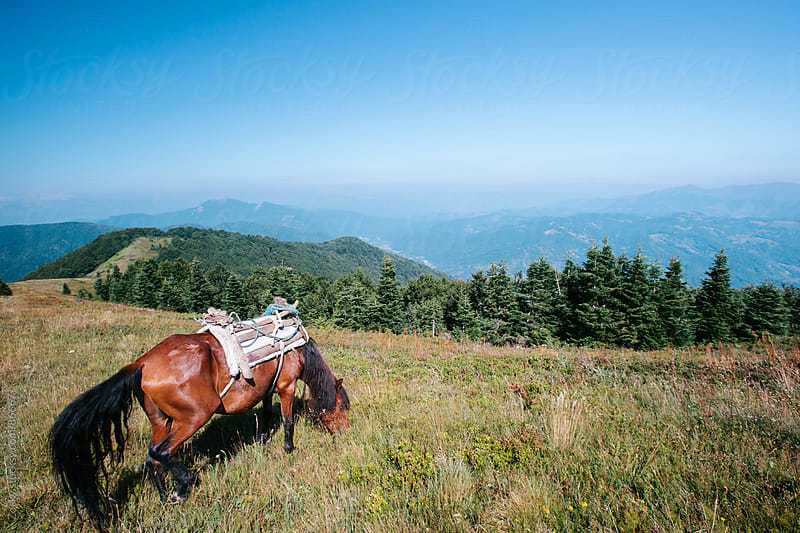 Horse in the mountain by Zocky for Stocksy United