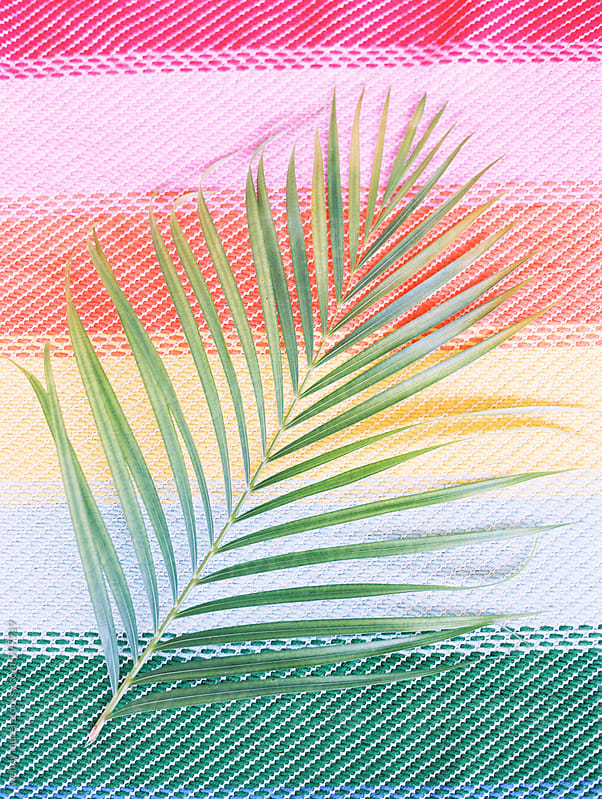 palm leaf on rainbow background by wendy laurel for Stocksy United