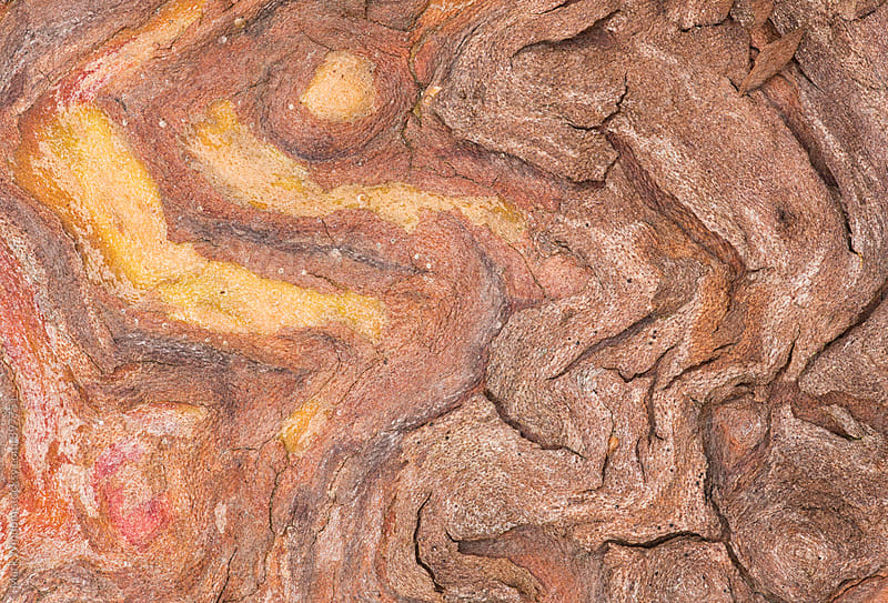 Madrona bark, closeup by Mark Windom for Stocksy United