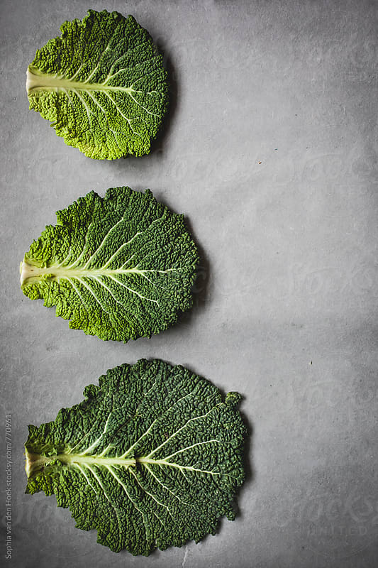 Kale leaves by Sophia van den Hoek for Stocksy United