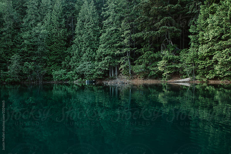 Shoreline of lake by Justin Mullet for Stocksy United