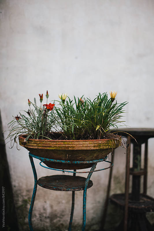 Flowers in rural flowerpot outdoors by Marija Mandic for Stocksy United