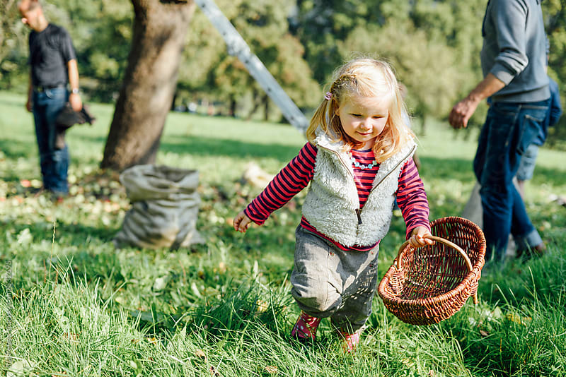 People: Girl with wicker basket on a meadow collecting apples by Ina Peters for Stocksy United