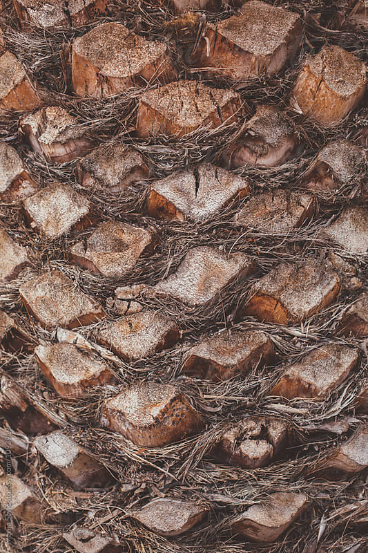 Detail of Palm Tree Trunk by Marija Savic for Stocksy United