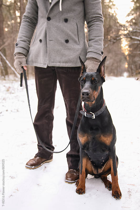Obedient Doberman sitting next to her owner in forest by Danil Nevsky for Stocksy United