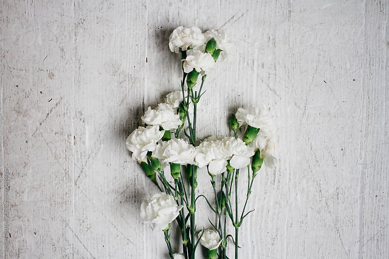 white carnation flower on wood grain floor ground surface | Stocksy ...