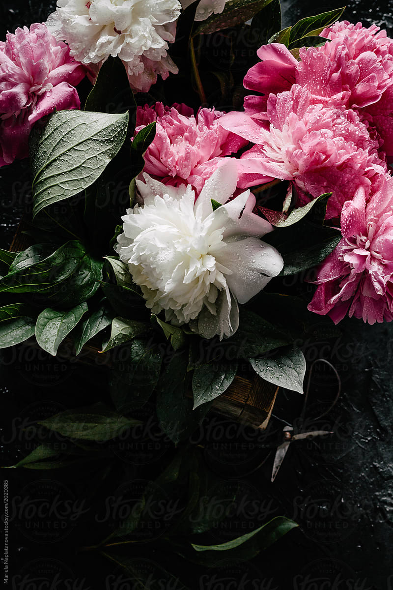 Pink And White Peonies Stocksy United